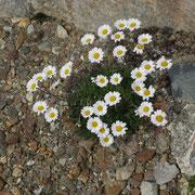 Ein Trost. Immer wieder Blumen in der kargen Landschaft