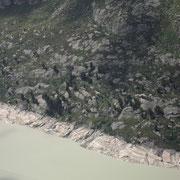 Der umkämpfte Arvenwald