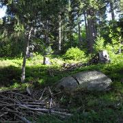 Im Wald untrhalb vom Meisibort