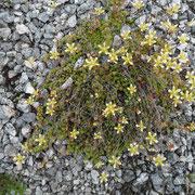 Ohne sichtbaren Nährboden gedeihen zierliche Pflanzen