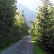 Kurz vor dem Wysstanni kreuzt man zum ersten Mal die Forststrasse
