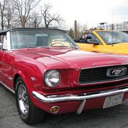 Mustang 1966 de Jean-Charles Pelletier