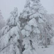 22日 熊の湯の樹氷