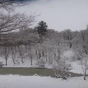 名もない池だが美しい