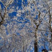 7合目付近の樹氷