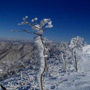 自称)樹氷尾根