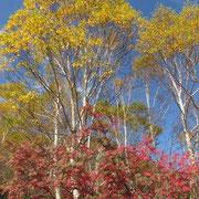 天狗堂付近の紅葉
