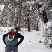 木々も雪だらけ