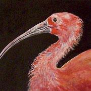 Ibis.Acrilico su cartoncino telato dim.30x40