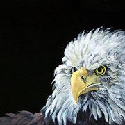 Aquila..Acrilico su cartoncino telato dim.30x23