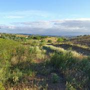 hier entsteht vor meinem inneren Auge bereits ein Nutzgarten, diese Senke entlang einer natürlichen Wasserlinie bietet mit viel fruchtbarem Boden gute Voraussetzungen ...
