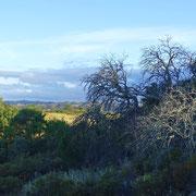 auch die trockenen Bäume und Stämme gehören zum Bild der Algarvelandschaften und haben ihren besonderen Reiz