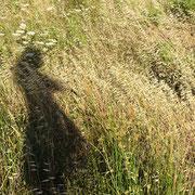 die wiegenden Gräser im Sommerwind ... mag ich ganz besonders ... und wie durch Zufall bin ich auch mit auf das Bild gekommen