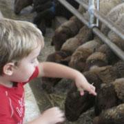 Yo acariciardo las ovejas