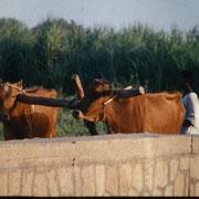 Escena rural cercana al templo de Kom Ombo