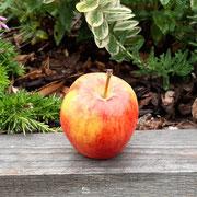 der letzte Apfel von unserem Baum