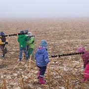 unterwegs auf dem abgeernteten Maisfeld...