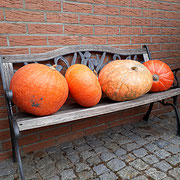Kürbisernte/Herbstdeko