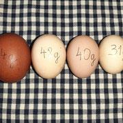 von unseren Hühnern...nach Größe und Gewicht sortiert