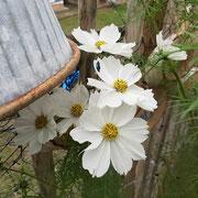 ...letzte Blüten