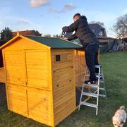 Der neue Hühnerstall wird aufgebaut