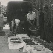 """Les """"banastes"""" du marché aux cerises d'Escoussans (au """"Canton"""")"""