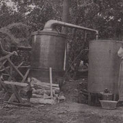 Distillation de la lavande chez M. Vimeney (Domaine de Couet, à Escoussans)