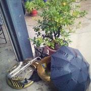 Unter Regenschirm und Pomeranzen