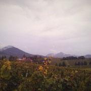 Blick nach Westen in den Pfälzer Wald und über den Geilweiler Hof