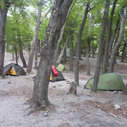 Notre campement dans une forêt de lengas