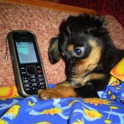 Слушает песенки в телефоне )))