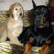 маленькая Чойс и Паша