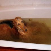 Чойс принимает травяные ванны :)