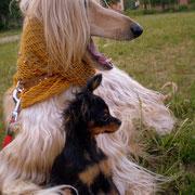 Чойс и Даки на прогулке