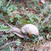escargot rencontré dans mon jardin