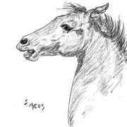 Young Colt, Drawing in charcoal, Sarah Myers