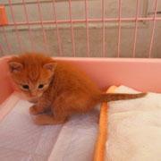 緑ちゃんの子猫 5月20日 淡路市へ