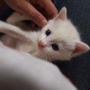 緑ちゃんの子猫 5月23日 洲本市へ