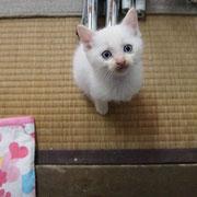 ナギ君 11月21日 チロちゃんの子供、海ちゃん、サイちゃん、ナギ君と兄弟 母猫チロちゃんと一緒に 尼崎市へ