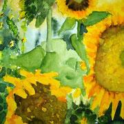 Sonnenblumen, 2003, 36 x 48cm, Aquarell