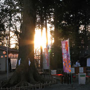 御神木と初日の出の木漏れ日