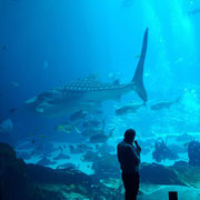 A man talking about the huge whale shark