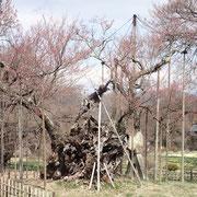 3月24日 冷たい風が八ヶ岳辺りから降りて来て、さむ〜い