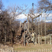 2月16日 澄んだ空気、冠雪の甲斐駒ケ岳が格別綺麗でした