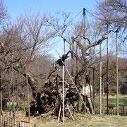 3月17日 今朝の澄んだ空気と冠雪の甲斐駒ケ岳はサイコー、桜さんも早く参加して!