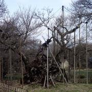 3月11日 弥生の桜 山河と人と 行く末は