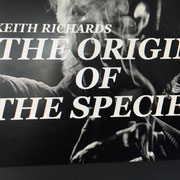 """""""The origin of the species"""" Foley editor - Track layer"""