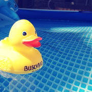 Buschbad-Ente