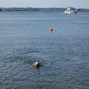 Schwimmen ist einfach nur Geil:-))