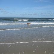 Wellen beißen - ein neuer Aussie-Sport